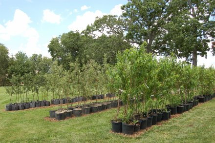 Mid April Through May 31 On Saay Mornings After By Ointment And August 17 November 2018 Daily At Our Site Tree Nursery